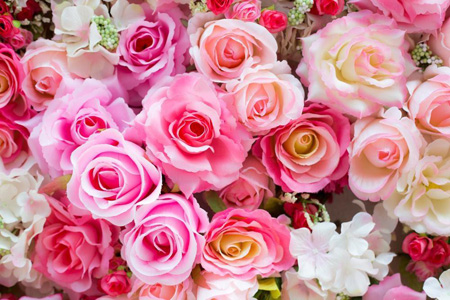 Cách để biết một bông hoa tươi là thế nào?