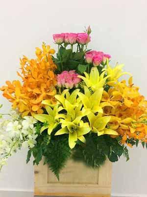 Hoa chúc mừng lan ly đẹp