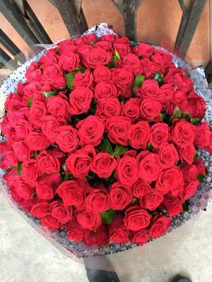 99 bông hồng đỏ đẹp